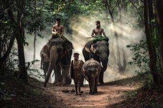 Mahout na província de Surin, Tailândia