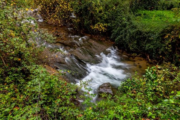 Majaceite do rio