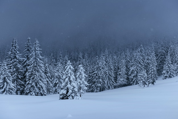 Majestosa paisagem de inverno, pinhal com árvores cobertas de neve. uma cena dramática com nuvens negras baixas, uma calma antes da tempestade