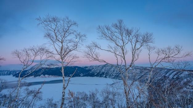 Majestoso branco enfeita árvore neve paisagem