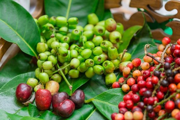 Makiang ou cleistocalyx nervosum var. paniala fruta saudável tailandesa para vinho