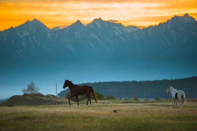 Manada de cavalos baios linda pasta nas montanhas ao pôr do sol, fundo natural ensolarado hipster incrível.