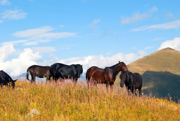 Manada de cavalos em pastagem livre nas montanhas de outono
