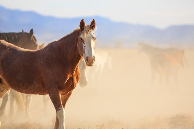 Manada de cavalos empoeirados