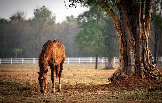 Manada de cavalos no campo, égua e potro pastando na fazenda de cavalos