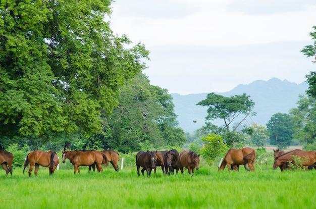 Manada de cavalos no pasto
