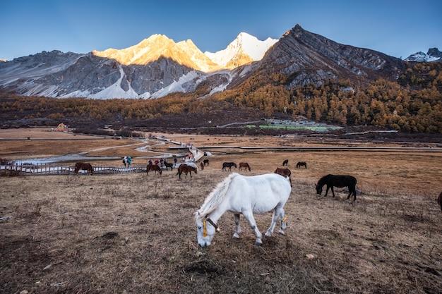 Manada de cavalos no pico prado com brilhante montanha ao pôr do sol