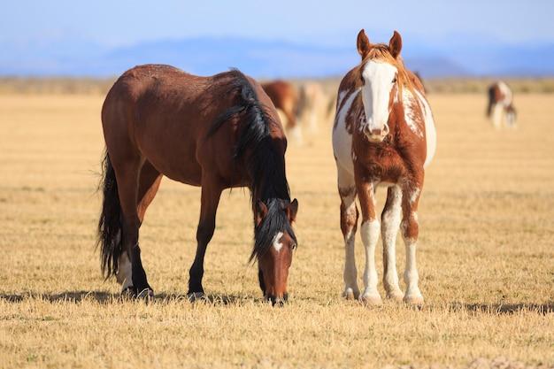 Manada de cavalos no rancho ocidental