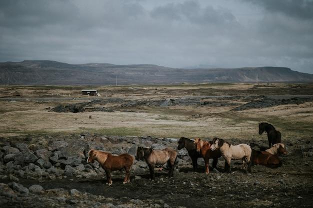 Manada de cavalos pastando em um campo com uma série de altas montanhas rochosas