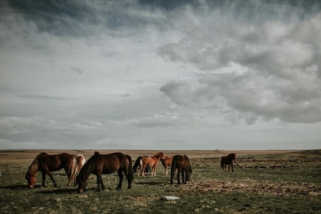 Manada de cavalos pastando em um campo sob um lindo céu nublado