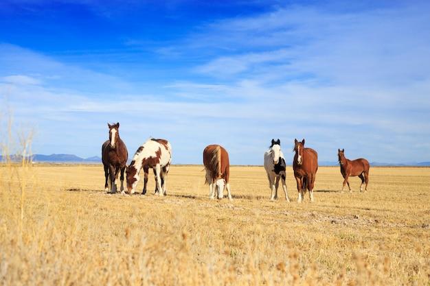 Manada de cavalos pastando no rancho ocidental