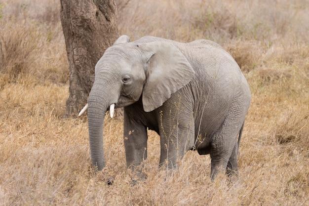 Manada de elefantes do parque nacional serengeti, na tanzânia, na áfrica. vida selvagem africana