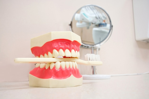 Mandíbula artificial e escova de dentes no consultório odontológico.