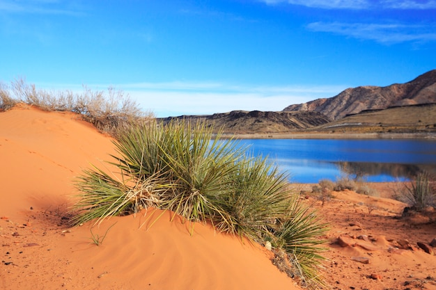 Mandioca e areia no parque estadual gunlock, utah