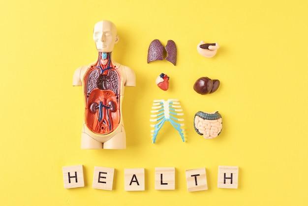 Manequim de anatomia humana com órgãos internos e a palavra saúde