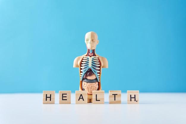 Manequim humano da anatomia com órgãos internos e palavra saúde em um fundo azul.