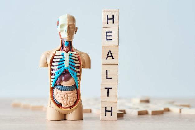 Manequim manequim de homem de plástico com órgãos internos e saúde palavra feita de blocos de madeira