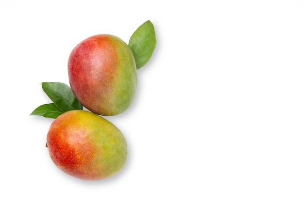 Manga. frutas frescas e brilhantes. vista plana.