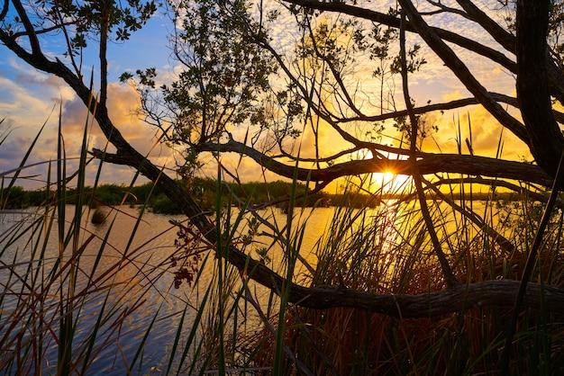 Mangroove pôr do sol na riviera maya