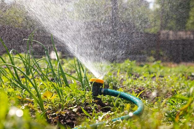Mangueira de irrigação de equipamento de jardim de rega para instalações de irrigação. água do pulverizador no vegetal.