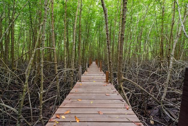 Manguezais em tung tong ou campo de mangue dourado no estuário pra sae, rayong, tailândia