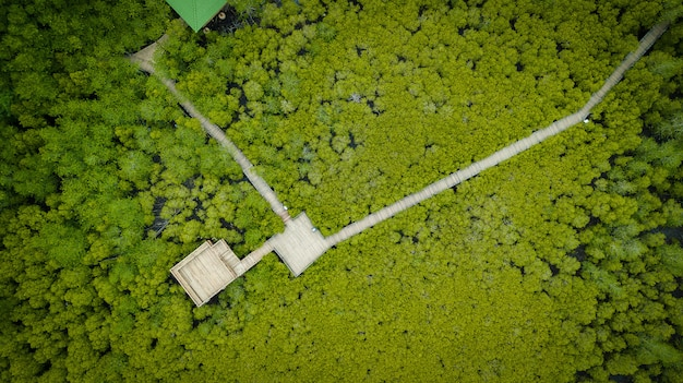 Manguezais intung prong thong ou golden mangrove field no estuário pra sae, rayong, tailândia