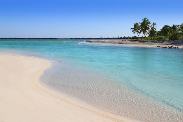 Manguezal turquesa rio boca mar do caribe