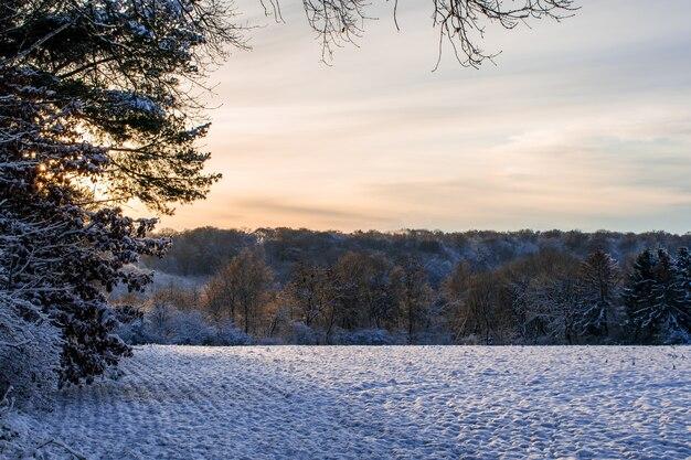 Manhã cedo com neve na orla da floresta, campo com neve ao pôr do sol