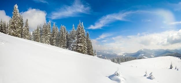 Manhã de inverno calmo paisagem montanhosa com belos pinheiros na encosta (montanhas dos cárpatos, ucrânia). dois tiros costuram a imagem.