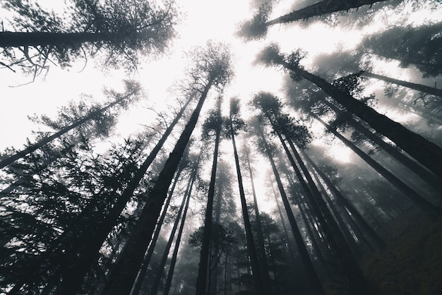 Manhã de nevoeiro em uma floresta
