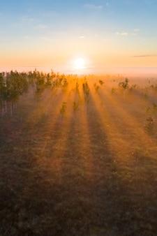 Manhã de nevoeiro no pântano exclusivo de yelnya (bielorrússia)