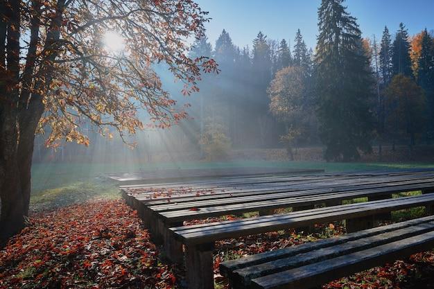 Manhã de outono no parque. os raios do sol brilham através das árvores