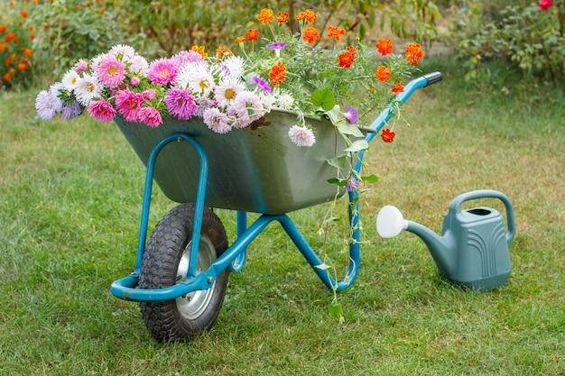 Manhã depois do trabalho no jardim de verão. carrinho de mão com flores, regador na grama verde.