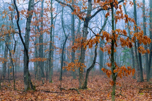 Manhã, em, outono, floresta, árvores, e, folhas, de, fantasia, paisagem