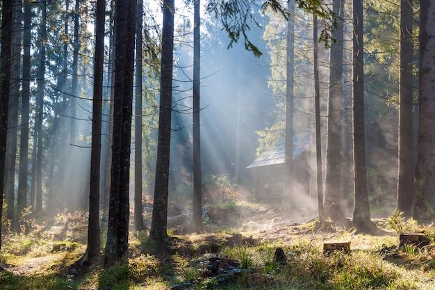 Manhã ensolarada enevoada na floresta.