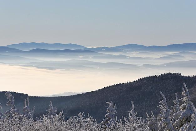 Manhã fria na floresta de inverno com nevoeiro, bela paisagem enevoada da república tcheca