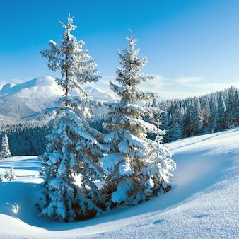 Manhã inverno calma paisagem montanhosa com pinheiros na encosta (goverla mount, carpathian mountains, ukraine). dois tiros costuram a imagem, proporções quadradas.