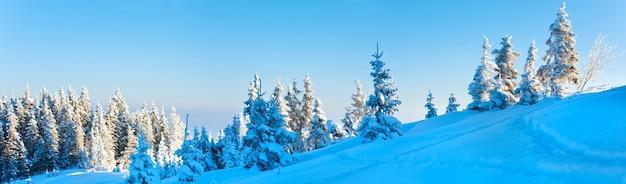 Manhã inverno calmo paisagem panorâmica da montanha com pinheiros na encosta (montanhas dos cárpatos, ucrânia). três tiros costuram a imagem.