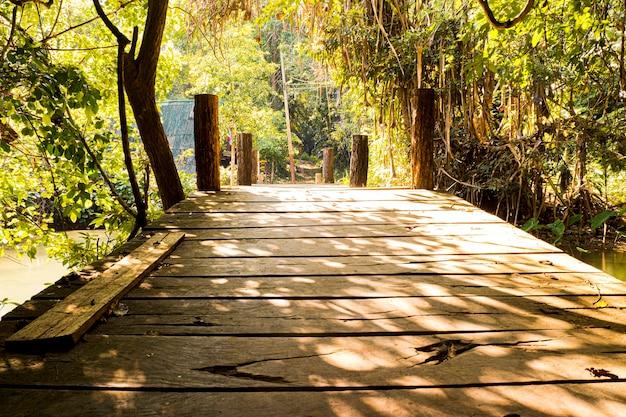 Manhã luz do sol através das árvores ponte de madeira na floresta tropical