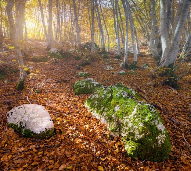 Manhã na floresta de outono.