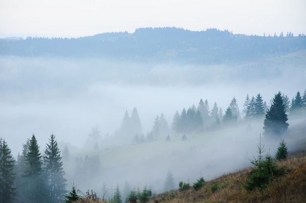 Manhã nas montanhas