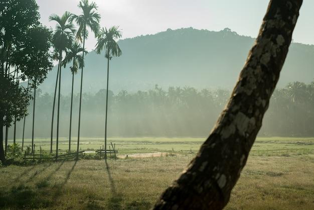 Manhã natural village