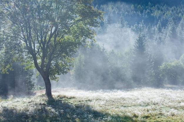 Manhã nebulosa de outono paisagem montanhosa com tufos de sementes de choupo na grama