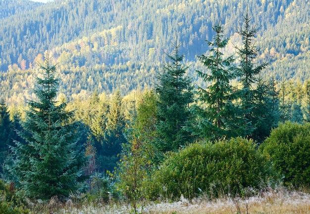 Manhã nublada de outono paisagem montanhosa com tufos de sementes de choupo na grama