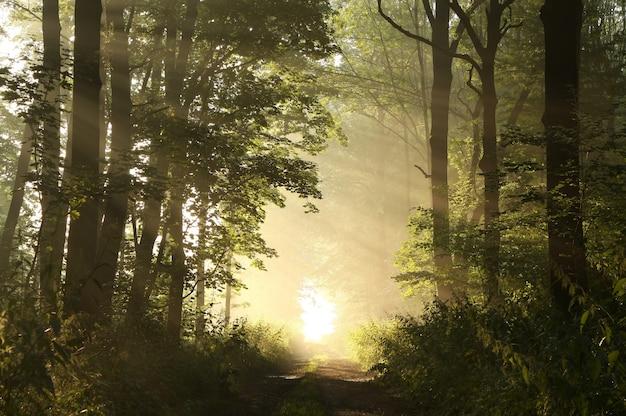 Manhã nublada de primavera na floresta frondosa