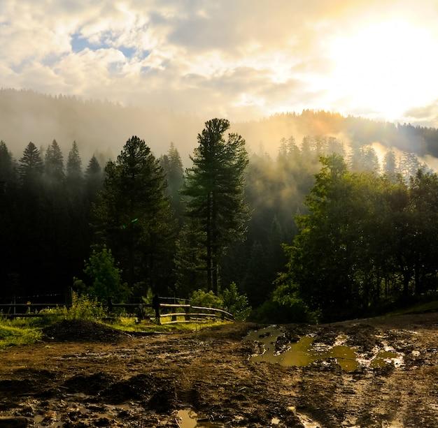 Manhã nublada na floresta