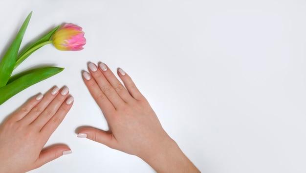 Manicure feminina em um fundo branco com uma tulipa. manicure simples para uma menina. bandeira.