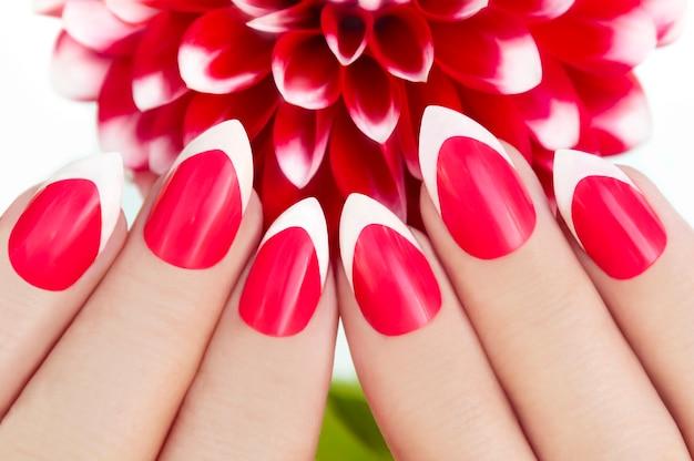 Manicure francesa vermelha com dálias em um fundo branco close-up.
