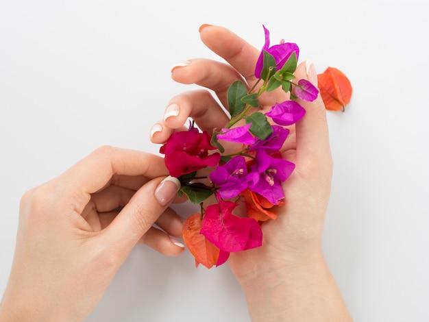 Manicured mãos segurando flores coloridas