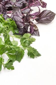 Manjericão azul e folhas de salsa. fundo branco. copie o espaço